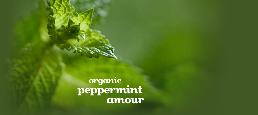 Peppermint Amour (Organic)