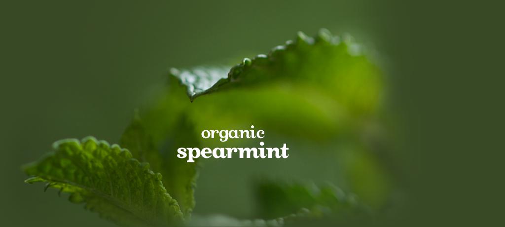 Spearmint (Organic)
