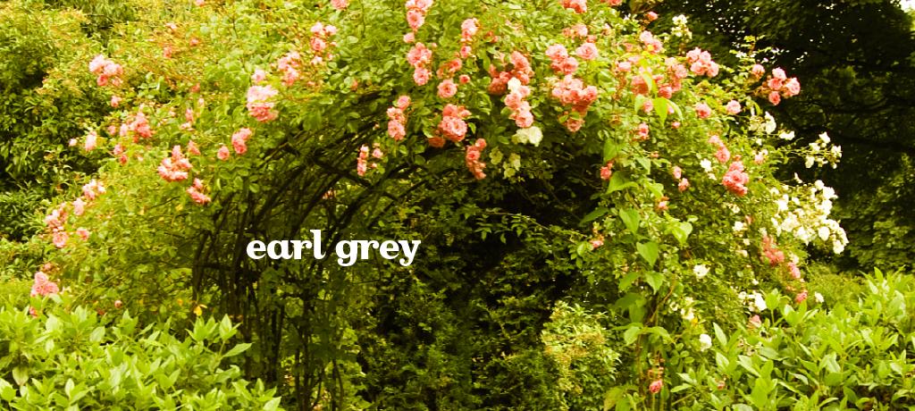 Earl Grey (Organic)